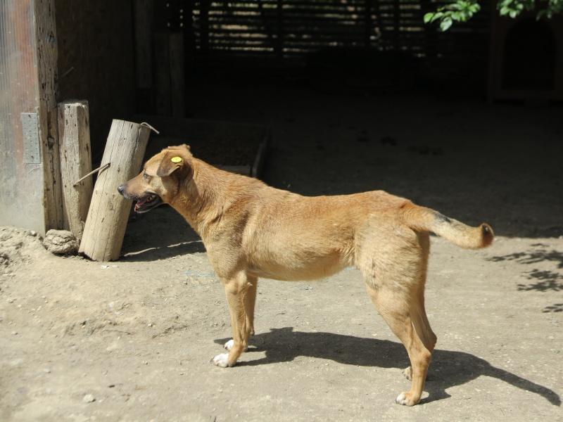 Tzupy, chien de notre quartier, mâle très sociable, né en 2009. Img_4413