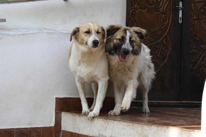 Murmurica, sauvetage de Sanda, chienne née en 2011 Img_4610