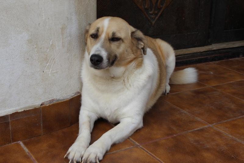Murmurica, sauvetage de Sanda, chienne née en 2011 Img_4612