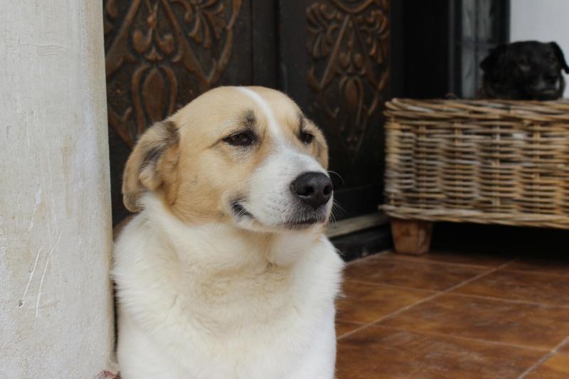 Murmurica, sauvetage de Sanda, chienne née en 2011 Img_4613