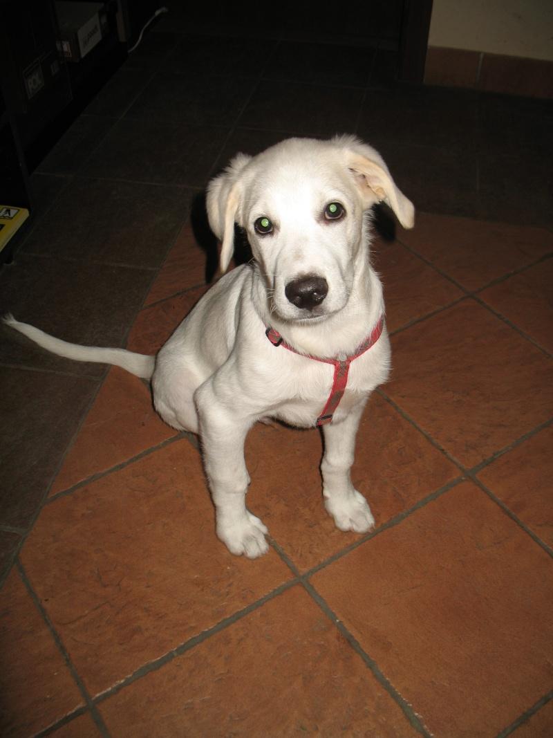 "Charly, dit ""Le petit Charly"", né en février 2014 Poze_110"