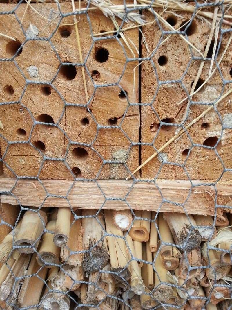 Hôtels à insectes 20141012