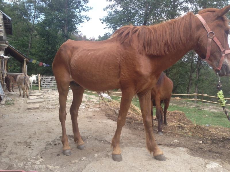Faire reprendre du poids à un vieux poney Photo-11