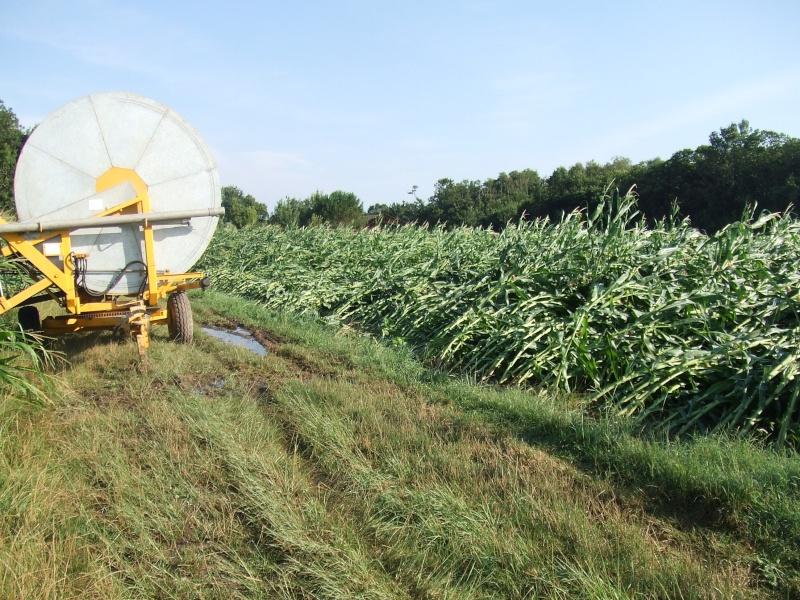 semis de maïs 2013  Tempat11