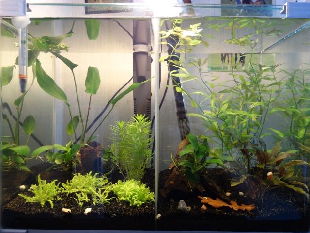 40L pour femelles bettas Aqua_410