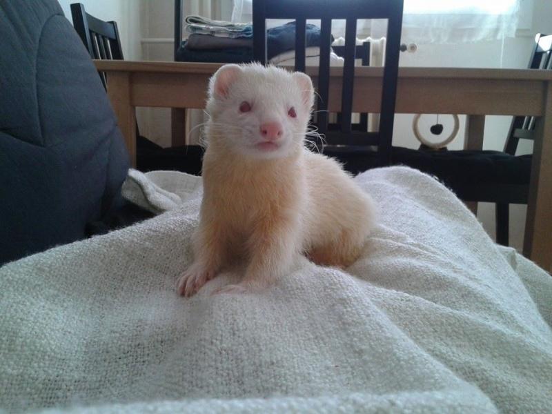 """[Décédé] Crapule (dit """"p'tit doudou""""), mâle albinos - Page 5 10389410"""