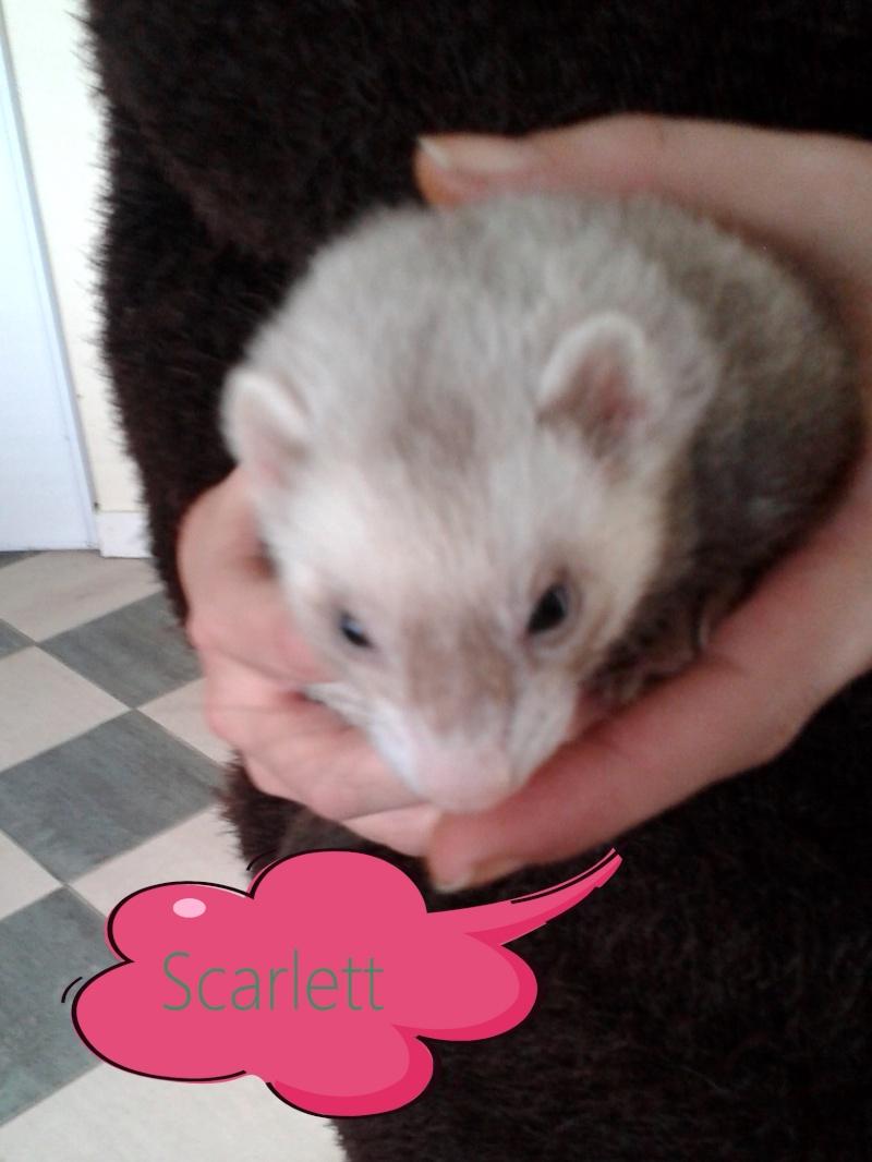 Scarlett (rebaptisée Quinine), femelle putoisée 20141010