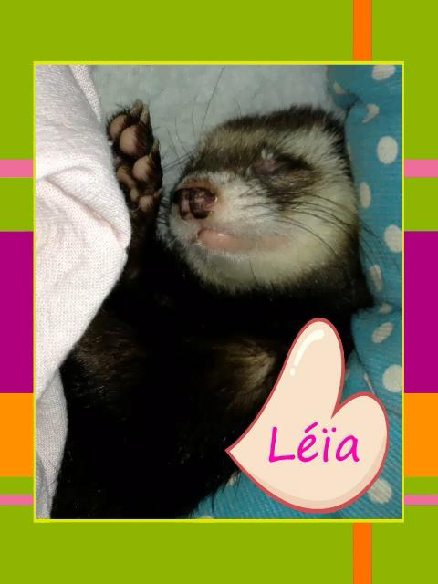 Léïa, femelle putoisée Img_6810