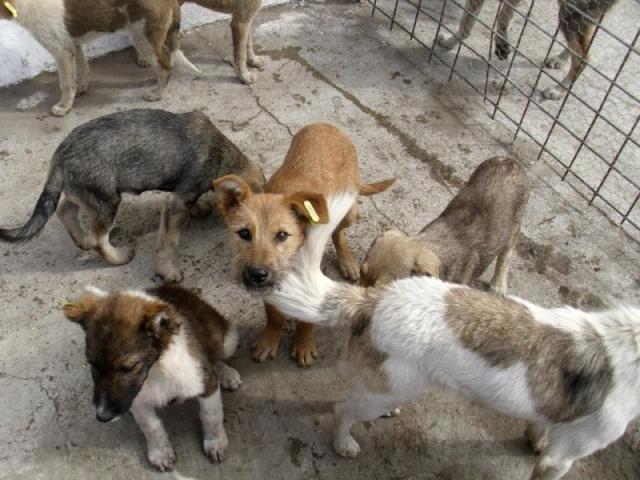Recherche petite chienne Raffy110