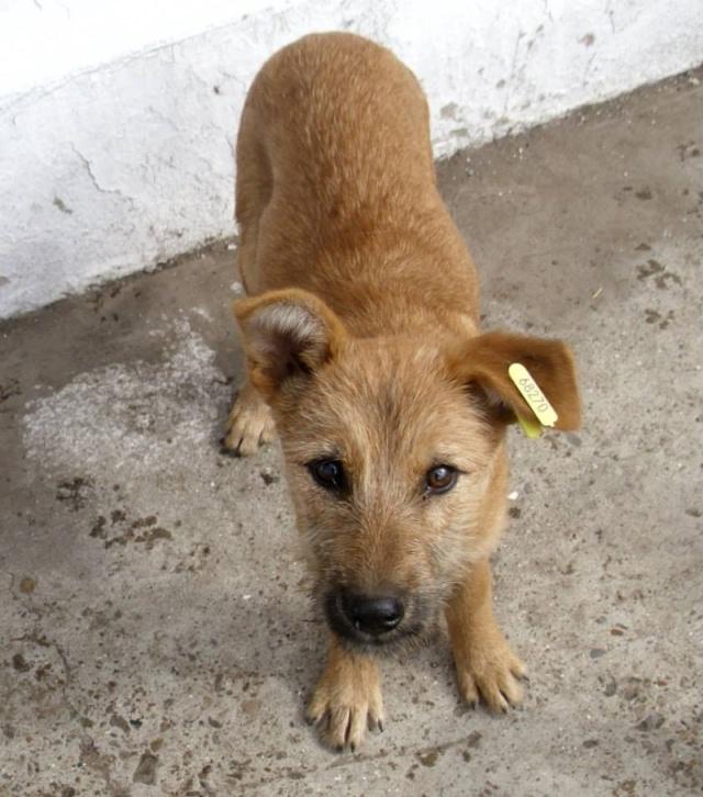 Recherche petite chienne Raffy111