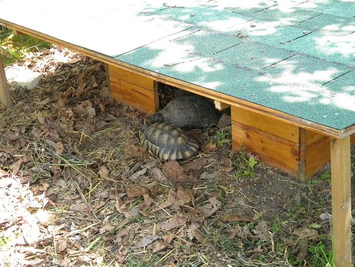 Cabane pour l'hibernation: J'ai peut-être fait une erreur Dscn3510