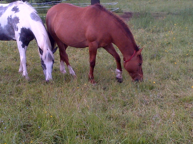 (Dept 63) DUN,  fjord/quarter horse, Sauvée par Morgane63 ! (Octobre2012) - Page 9 Img-2012