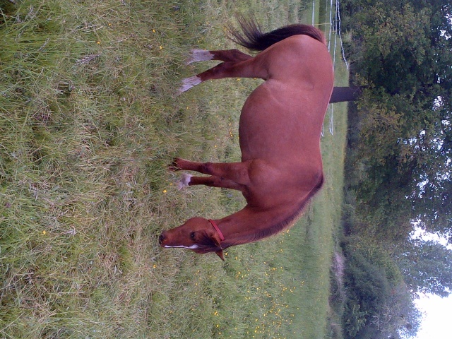 (Dept 63) DUN,  fjord/quarter horse, Sauvée par Morgane63 ! (Octobre2012) - Page 9 Img-2014