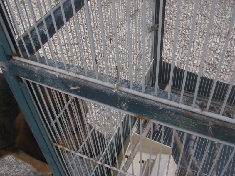 Retapage de volière : peinture et aménagement. Imgp0010