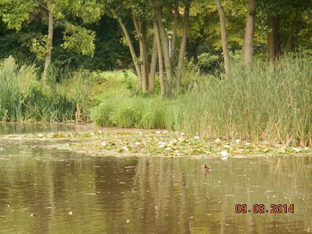 Duderstadt Germania Dscn0475