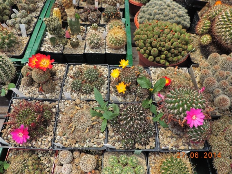 Cacti and Sukkulent in Köln, every day new flowers in the greenhouse Part 103 Bild1000