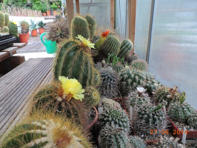 Cacti and Sukkulent in Köln, every day new flowers in the greenhouse Part 103 Bild1016