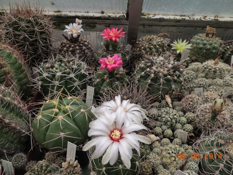 Cacti and Sukkulent in Köln, every day new flowers in the greenhouse Part 103 Bild1034