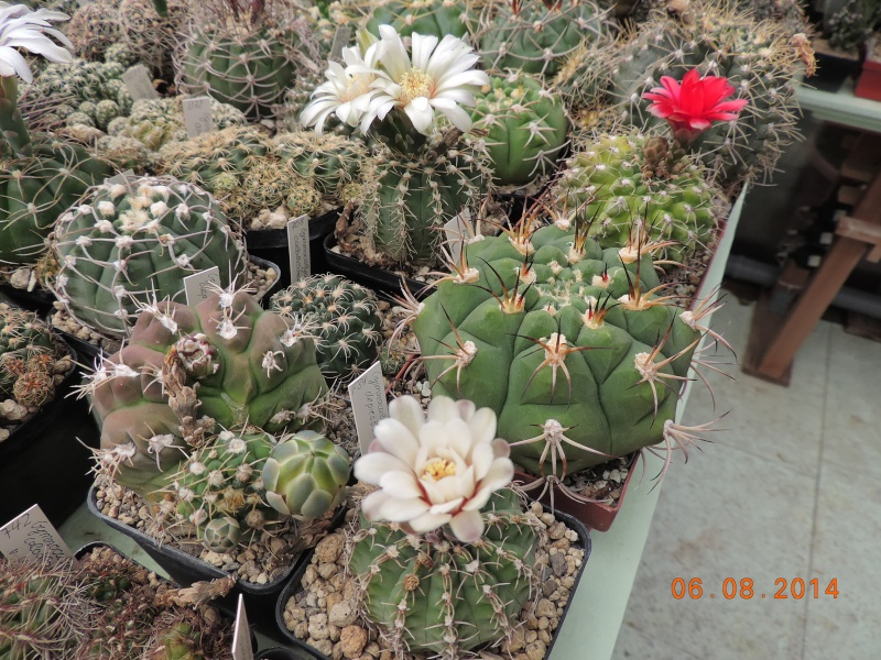 Cacti and Sukkulent in Köln, every day new flowers in the greenhouse Part 103 Bild1035