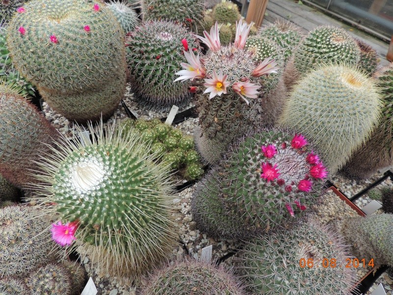 Cacti and Sukkulent in Köln, every day new flowers in the greenhouse Part 103 Bild1045