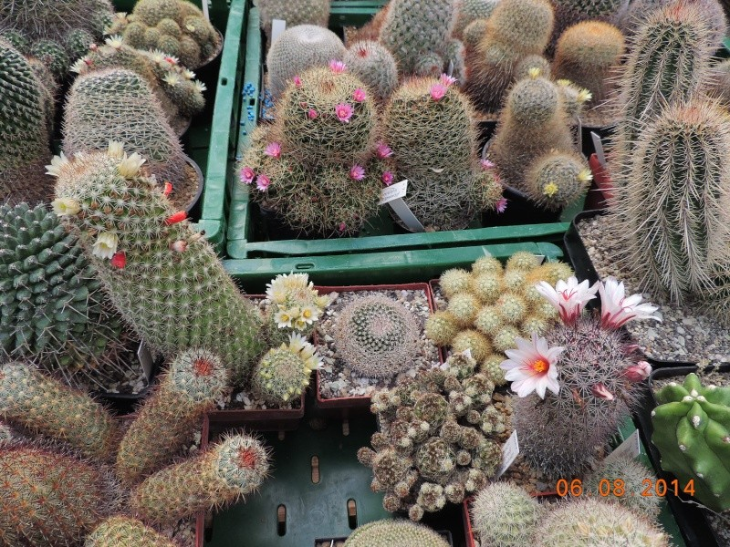 Cacti and Sukkulent in Köln, every day new flowers in the greenhouse Part 103 Bild1049