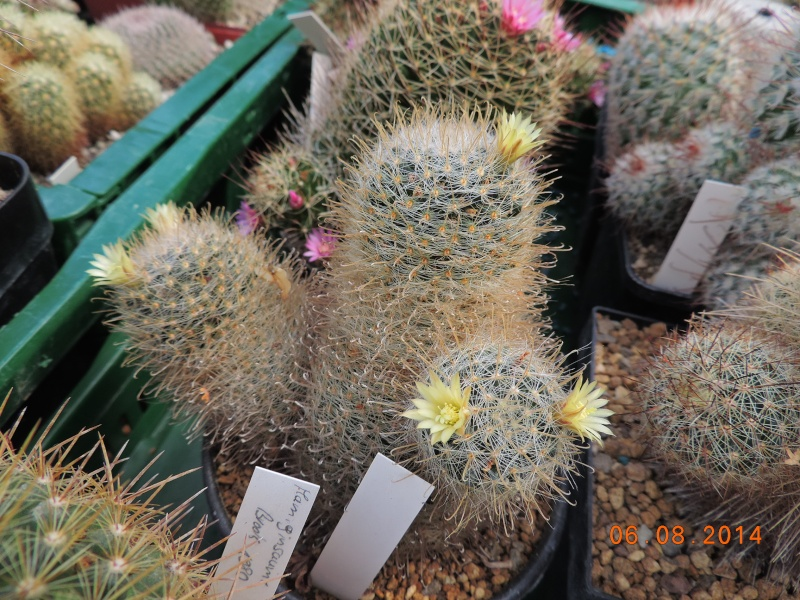 Cacti and Sukkulent in Köln, every day new flowers in the greenhouse Part 103 Bild1051