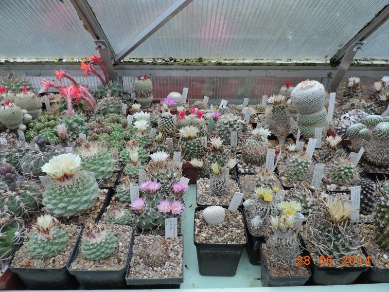 Cacti and Sukkulent in Köln, every day new flowers in the greenhouse Part 103 Bild1095
