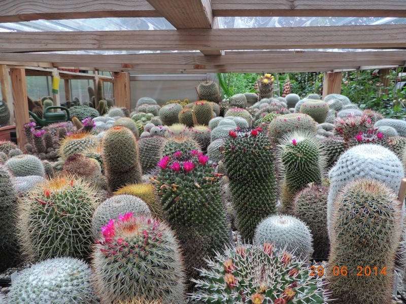 Cacti and Sukkulent in Köln, every day new flowers in the greenhouse Part 103 Bild1122