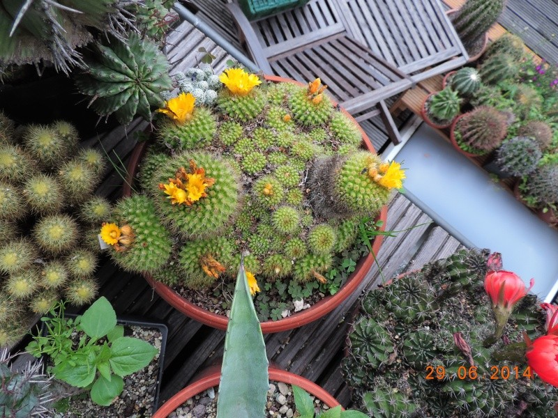Cacti and Sukkulent in Köln, every day new flowers in the greenhouse Part 103 Bild1124