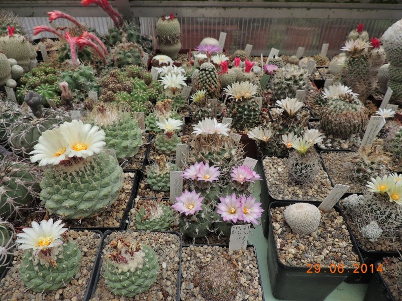 Cacti and Sukkulent in Köln, every day new flowers in the greenhouse Part 103 Bild1138