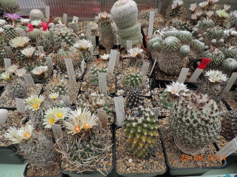 Cacti and Sukkulent in Köln, every day new flowers in the greenhouse Part 103 Bild1139