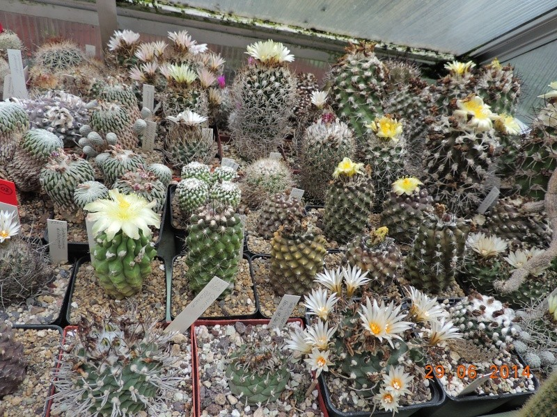 Cacti and Sukkulent in Köln, every day new flowers in the greenhouse Part 103 Bild1142