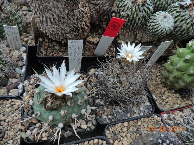 Cacti and Sukkulent in Köln, every day new flowers in the greenhouse Part 104 Bild1187