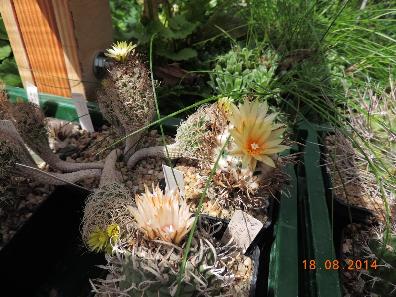 Cacti and Sukkulent in Köln, every day new flowers in the greenhouse Part 104 Bild1189