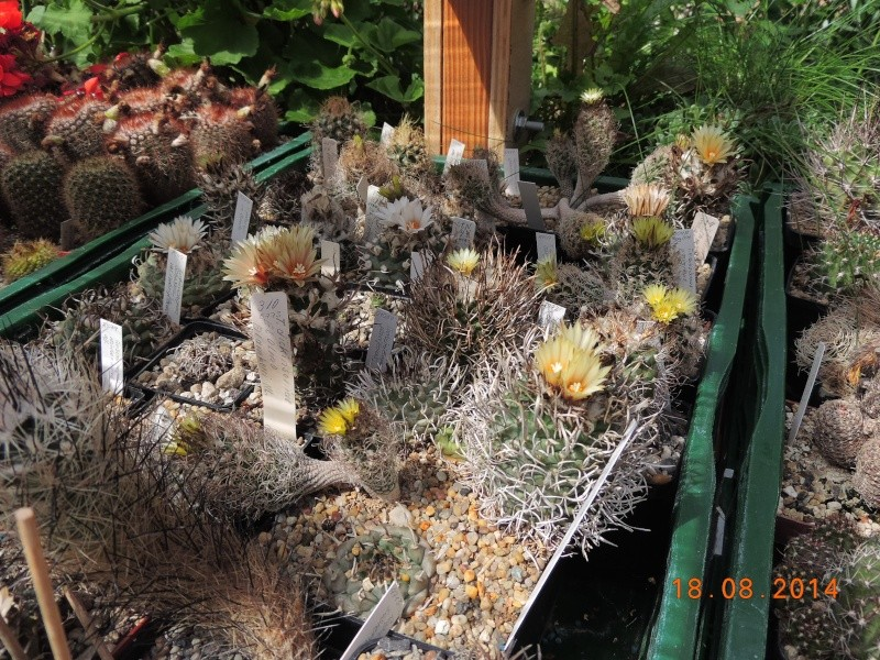Cacti and Sukkulent in Köln, every day new flowers in the greenhouse Part 104 Bild1195