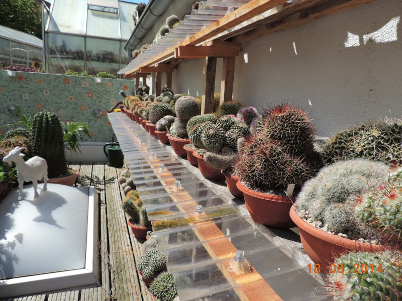 Cacti and Sukkulent in Köln, every day new flowers in the greenhouse Part 104 Bild1213