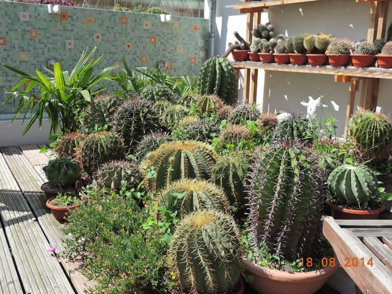 Cacti and Sukkulent in Köln, every day new flowers in the greenhouse Part 104 Bild1214