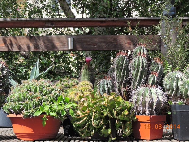 Cacti and Sukkulent in Köln, every day new flowers in the greenhouse Part 104 Bild1215