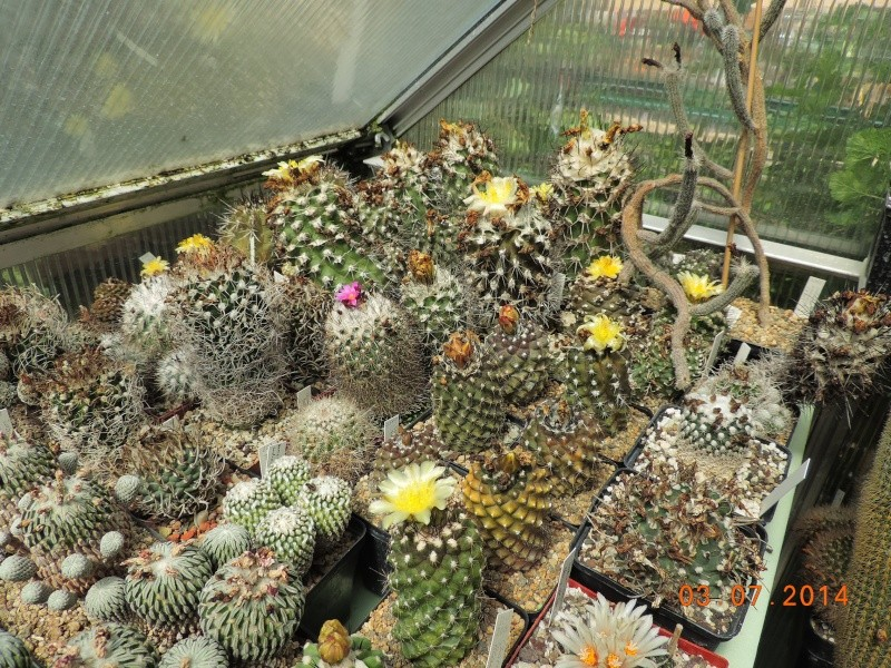 Cacti and Sukkulent in Köln, every day new flowers in the greenhouse Part 105 Bild1239