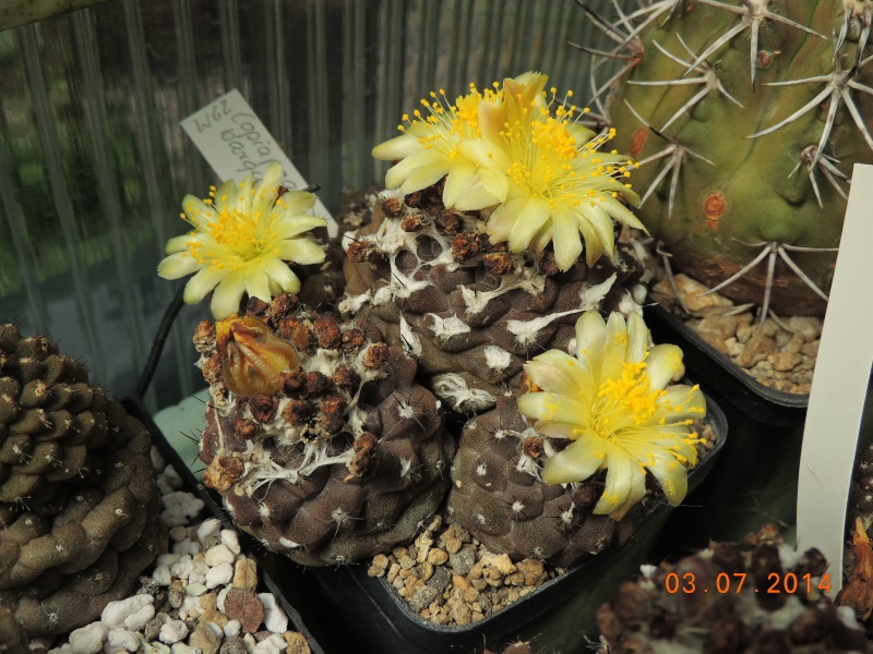 Cacti and Sukkulent in Köln, every day new flowers in the greenhouse Part 105 Bild1240