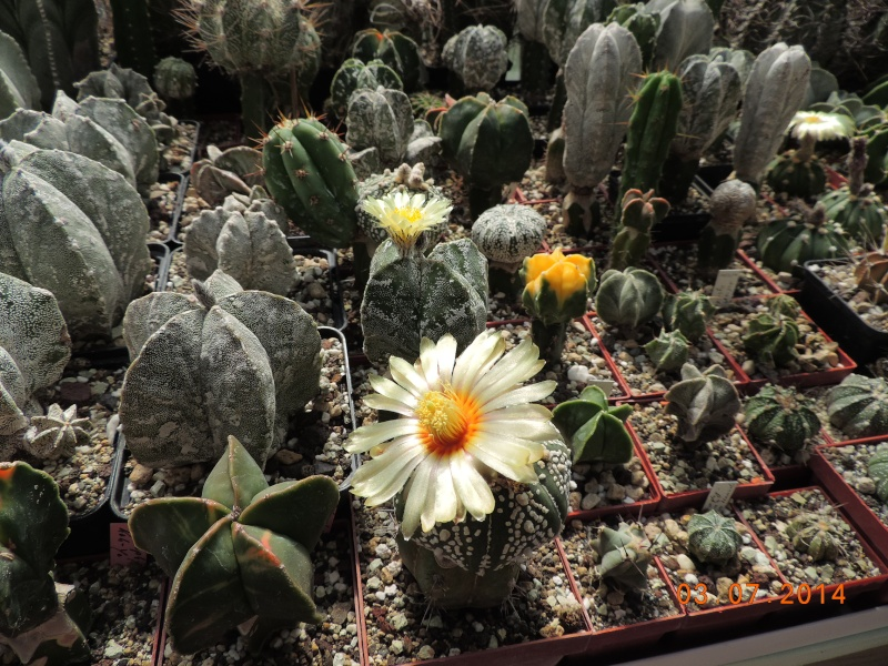 Cacti and Sukkulent in Köln, every day new flowers in the greenhouse Part 105 Bild1259