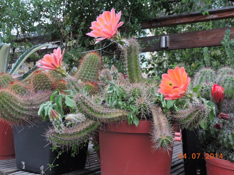 Cacti and Sukkulent in Köln, every day new flowers in the greenhouse Part 105 Bild1270