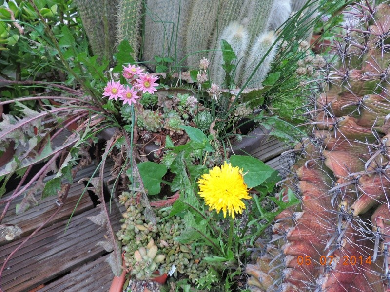 Cacti and Sukkulent in Köln, every day new flowers in the greenhouse Part 106 Bild1338