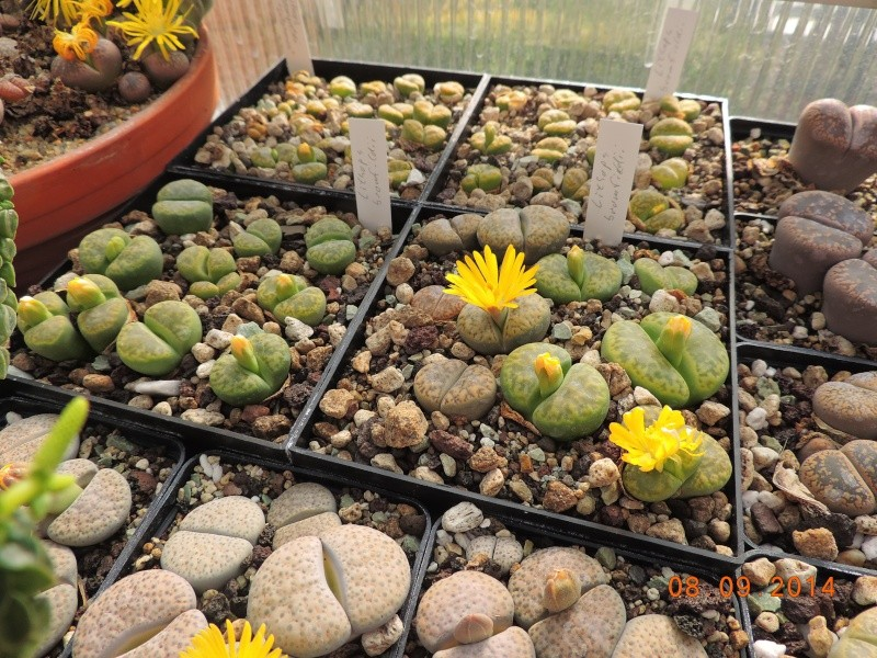 Cacti and Sukkulent in Köln, every day new flowers in the greenhouse Part 106 Bild1358