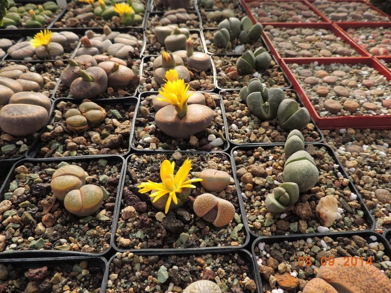 Cacti and Sukkulent in Köln, every day new flowers in the greenhouse Part 106 Bild1359