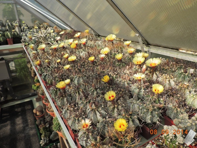 Cacti and Sukkulent in Köln, every day new flowers in the greenhouse Part 106 Bild1368