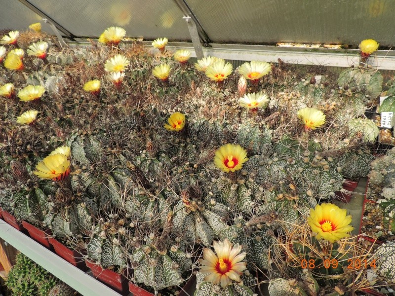 Cacti and Sukkulent in Köln, every day new flowers in the greenhouse Part 106 Bild1399