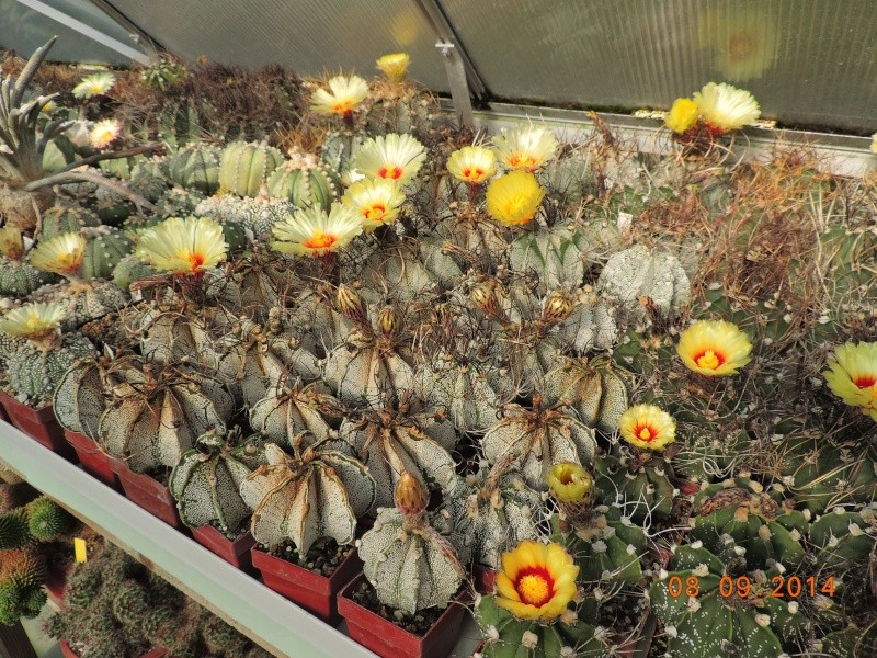 Cacti and Sukkulent in Köln, every day new flowers in the greenhouse Part 106 Bild1400