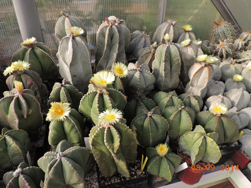 Cacti and Sukkulent in Köln, every day new flowers in the greenhouse Part 106 Bild1402