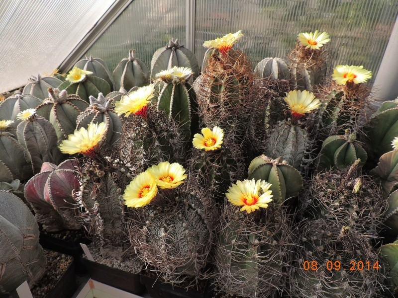 Cacti and Sukkulent in Köln, every day new flowers in the greenhouse Part 106 Bild1403